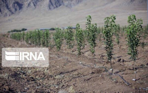 خبرنگاران مرحله سوم کاشت یک میلیون اصله درخت در تبریز 15 اسفند شروع می گردد